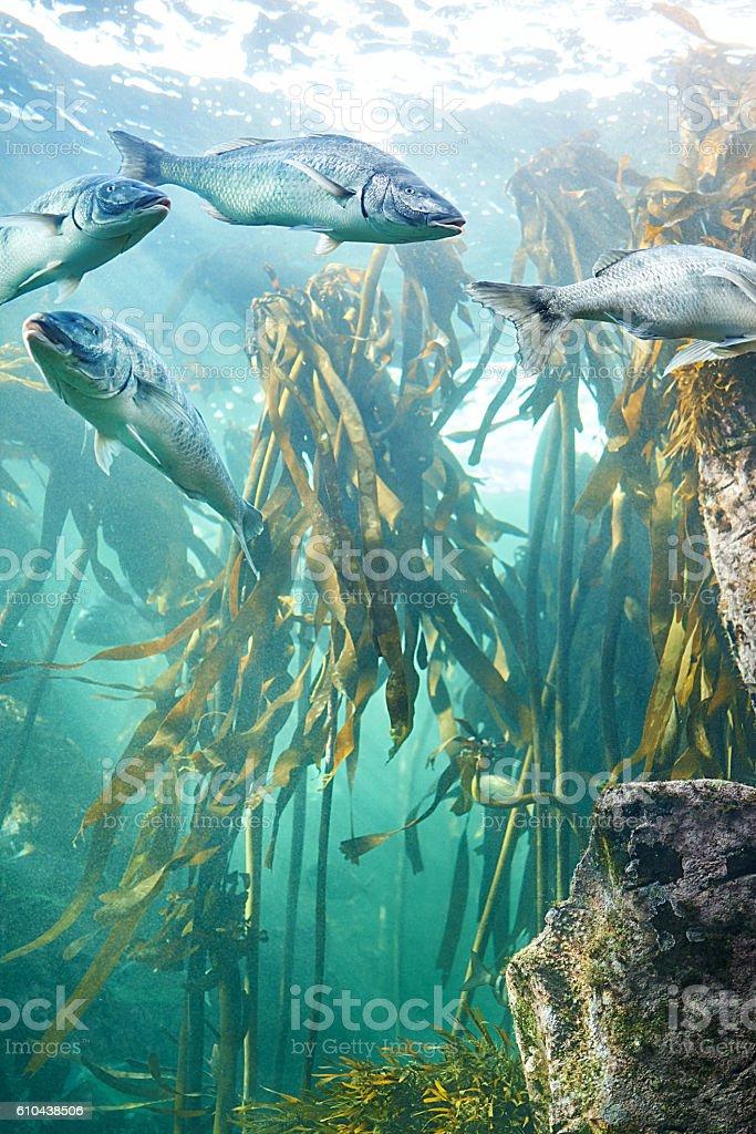 Deep sea encounters stock photo