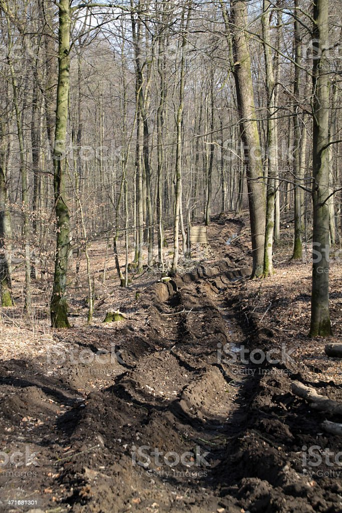 Deep tracks in a forest stock photo