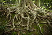 Deep Tree Roots Exposed by Erosion on a Hillside