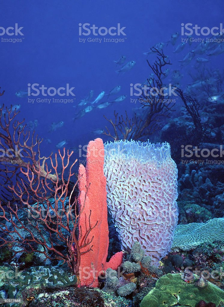 SVG deep water reef stock photo
