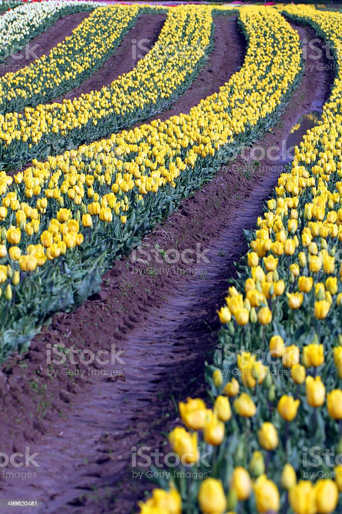 Deep Yellow Furrows royalty-free stock photo