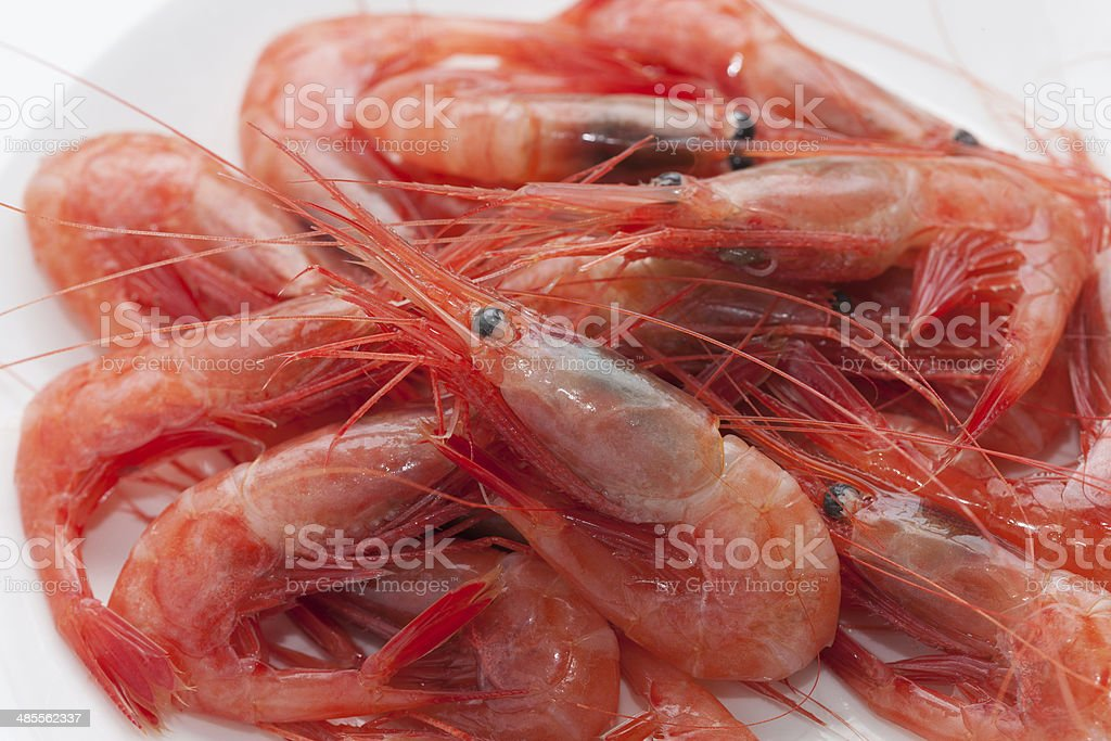 Deep-water shrimp stock photo