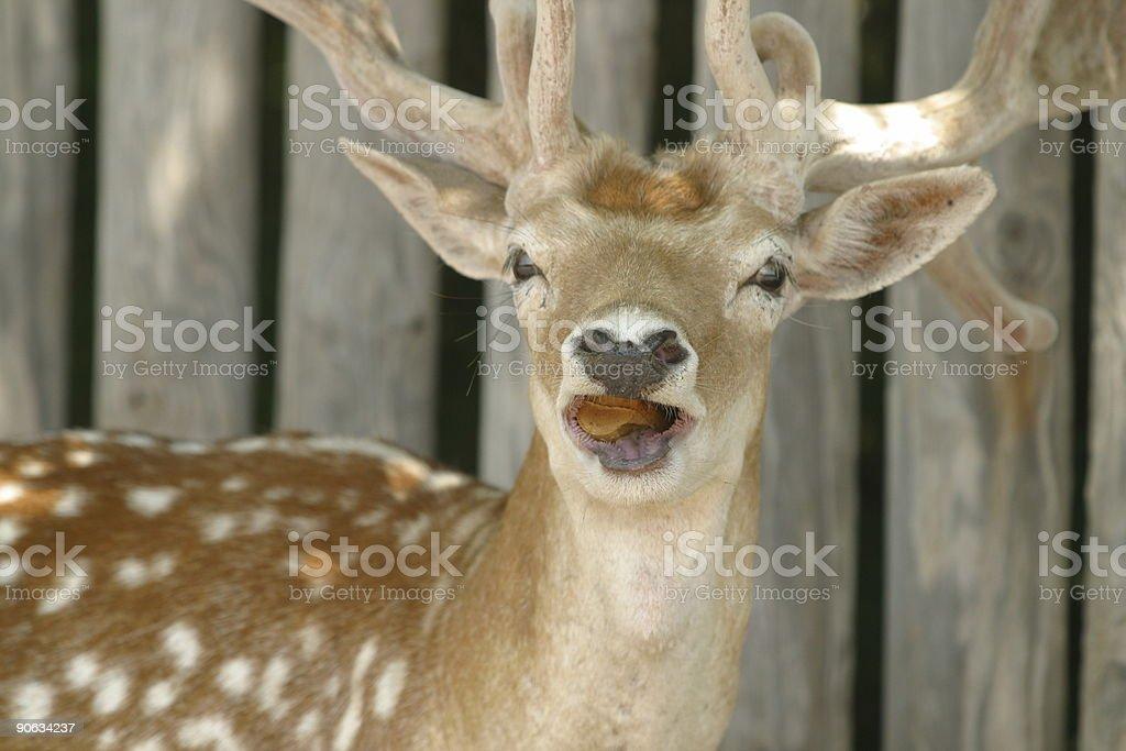 deer 9 stock photo