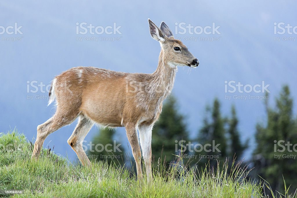 Deer and Mountains royalty-free stock photo