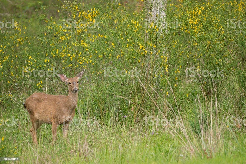 Deer and Wildflowers stock photo
