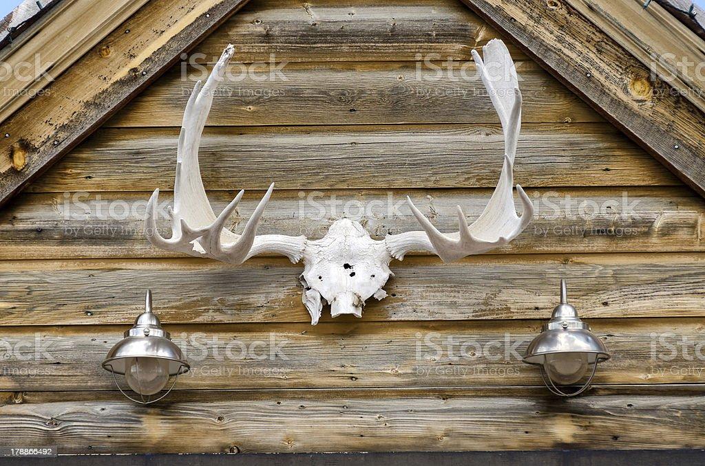 deer antlers royalty-free stock photo