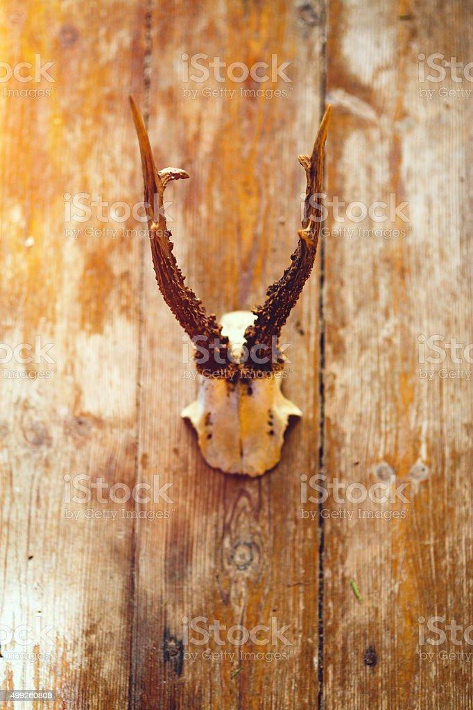 Deer Antlers stock photo