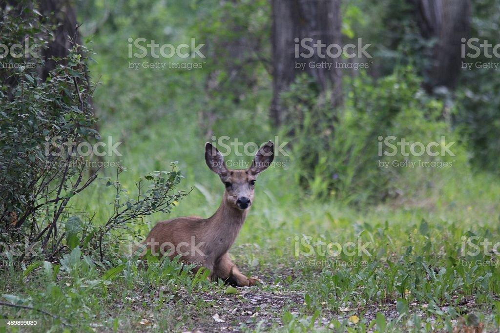 Deer bed stock photo