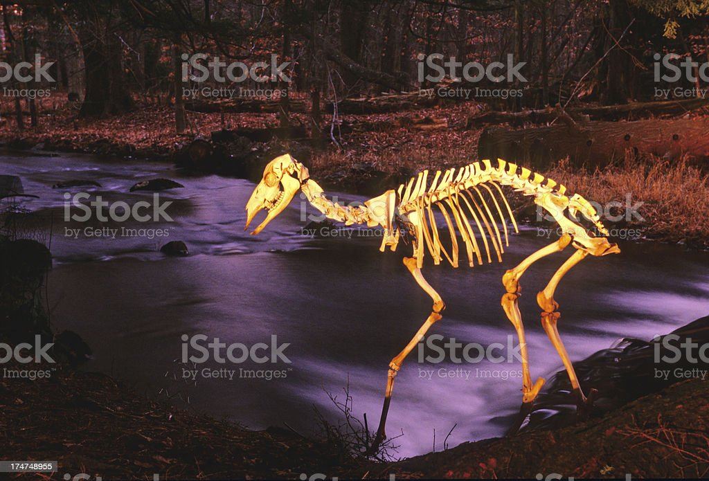 Deer By the Brook royalty-free stock photo