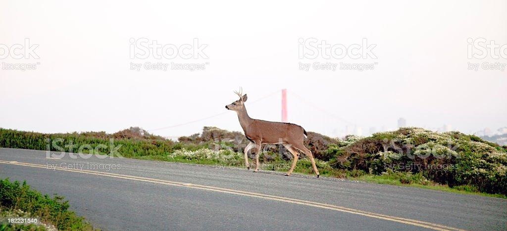 Deer Crossing royalty-free stock photo