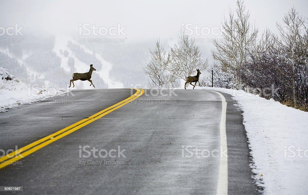 Deer Crossing Road stock photo