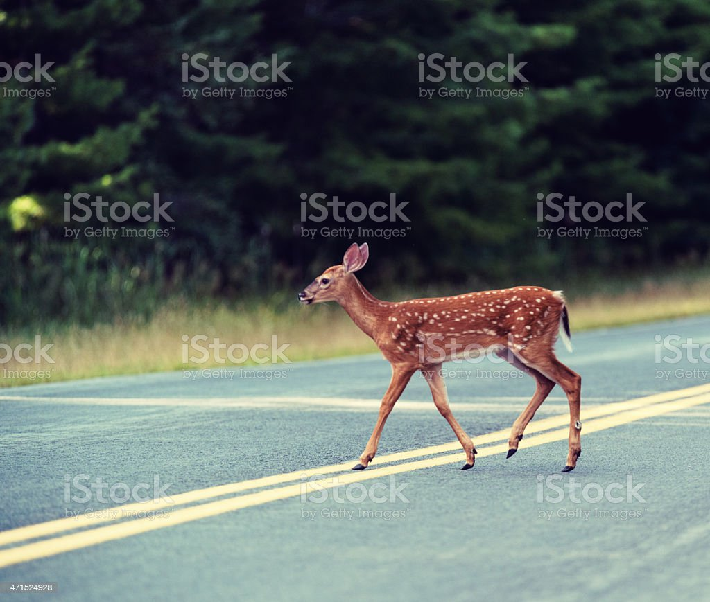 Deer Fawn Crossing Road stock photo