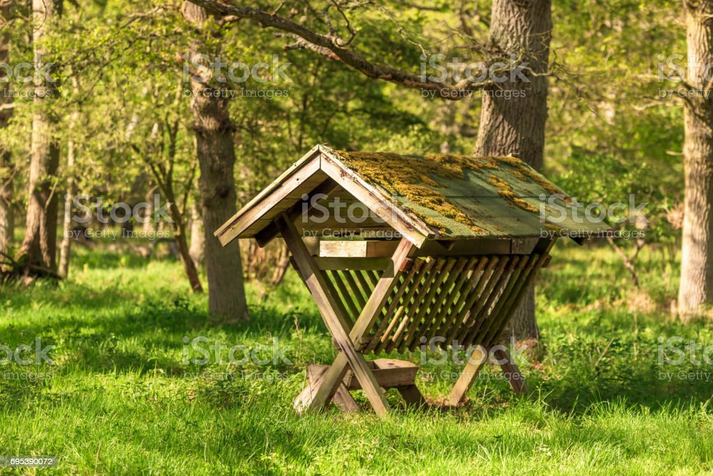 Deer feeding station stock photo