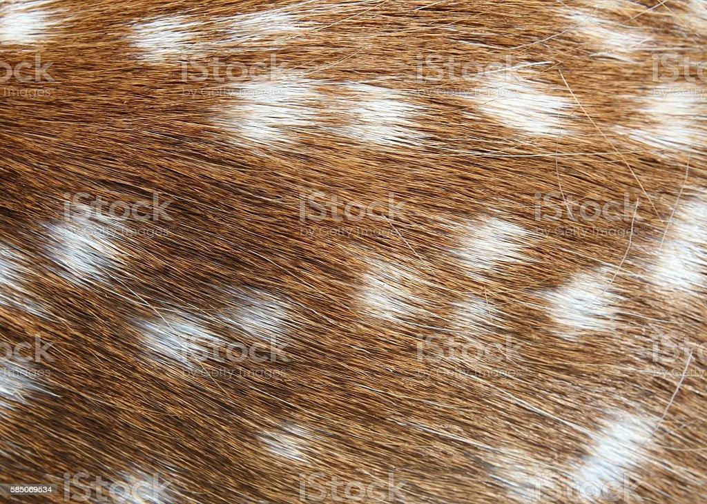 Deer hair background stock photo