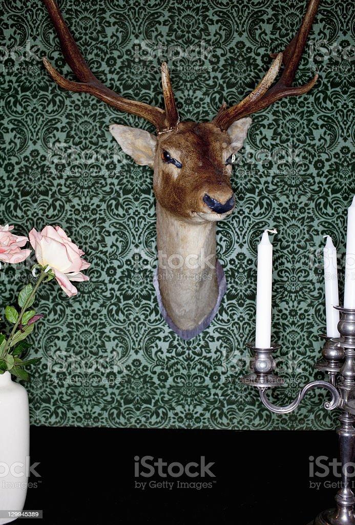 Deer head mounted on dining room wall stock photo