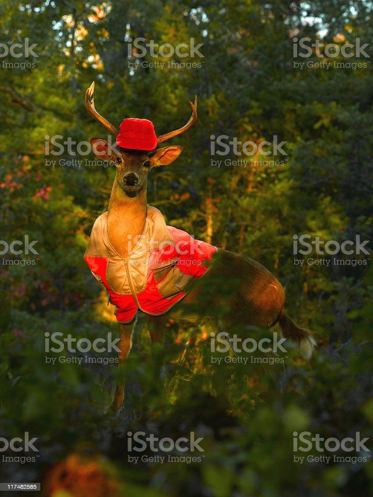 Deer Hunter stock photo