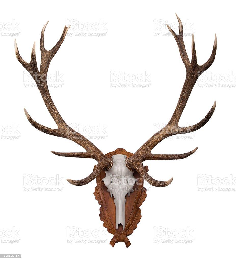 Deer hunting trophy on wood stock photo