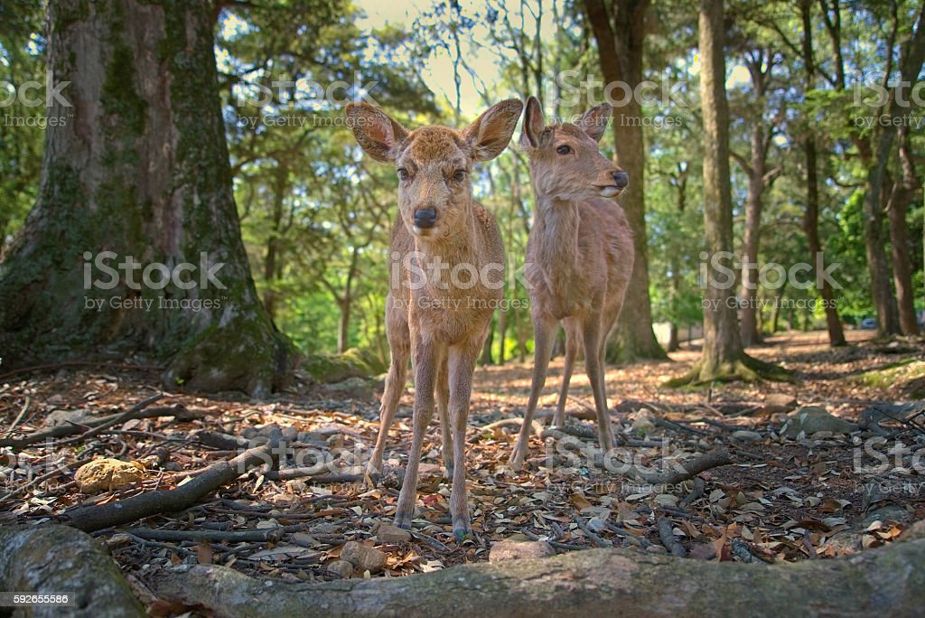 Deer in Forest stock photo