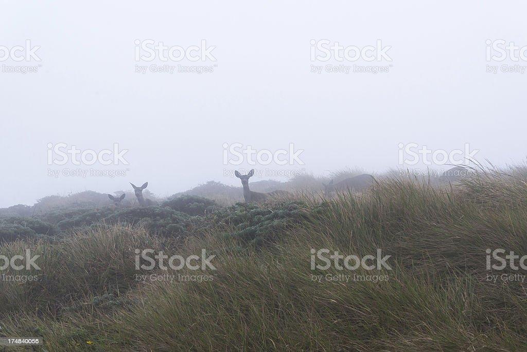 Deer in Grassy Meadow royalty-free stock photo