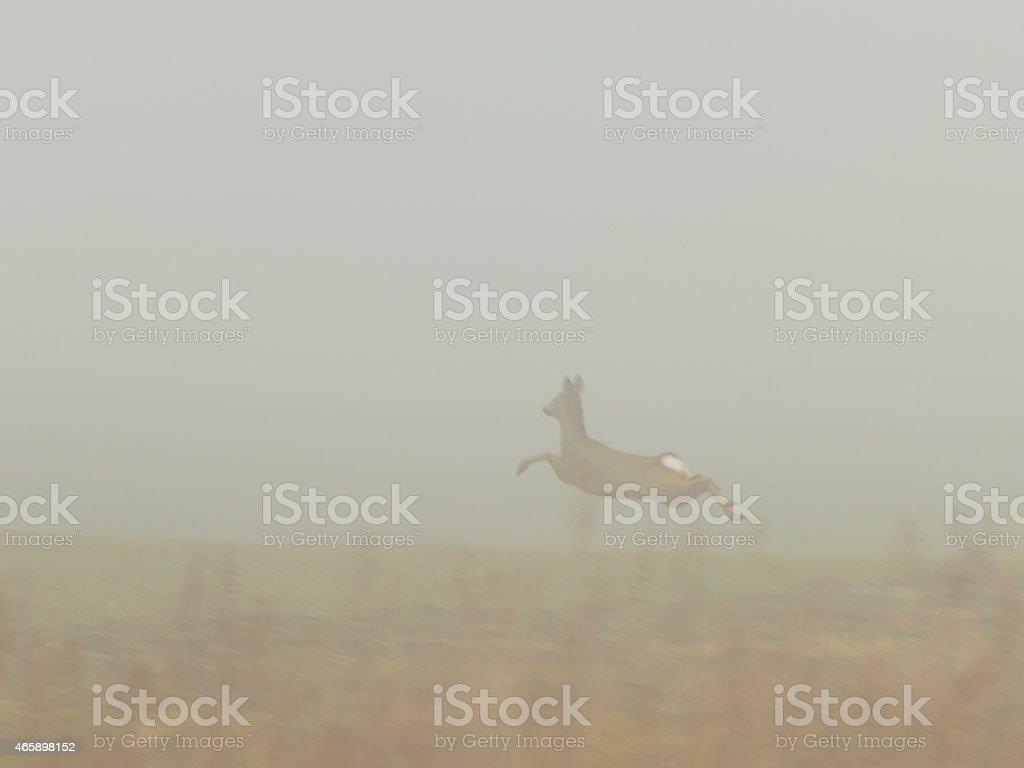 deer in the fog stock photo