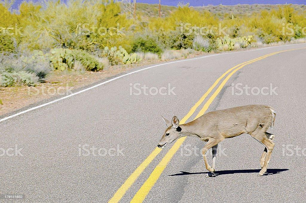 Deer in the road stock photo
