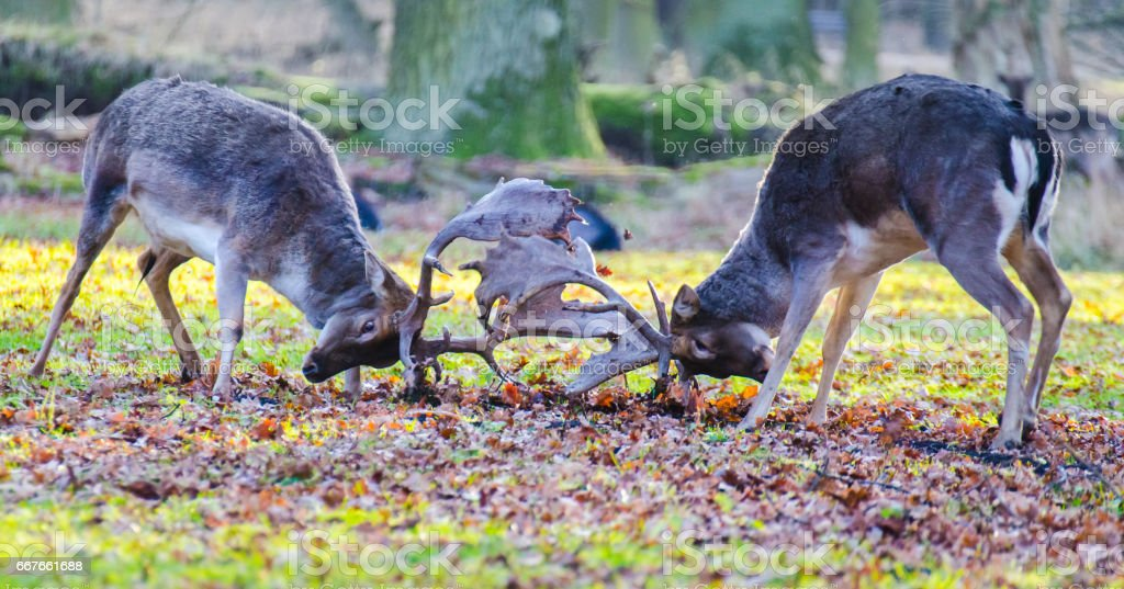 Deer in the summer forest stock photo