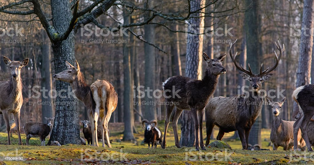 Deer in the woods royalty-free stock photo