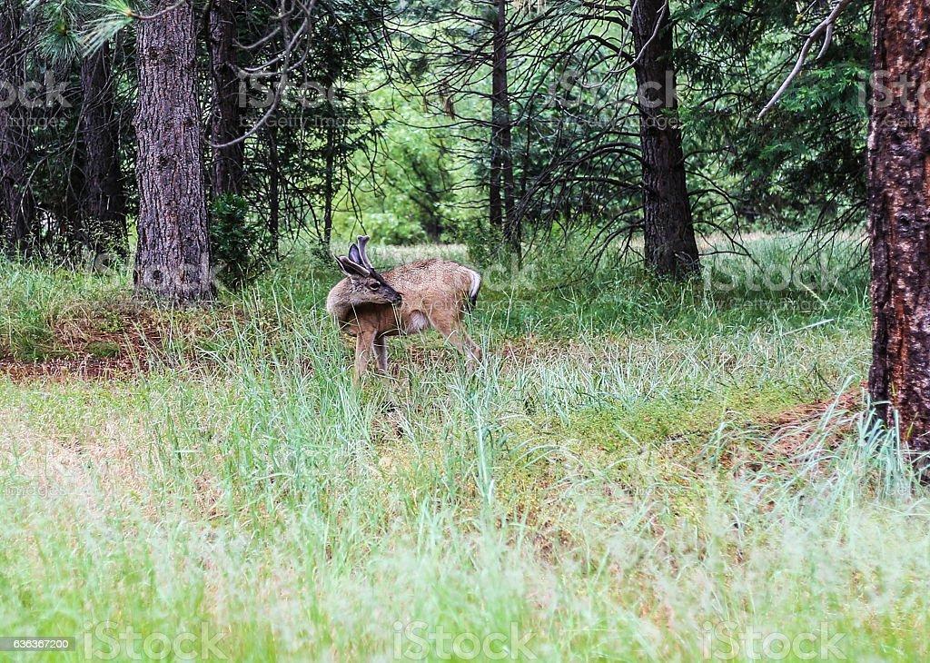 Deer in the woods stock photo
