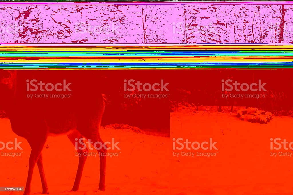 Deer in Winter royalty-free stock photo