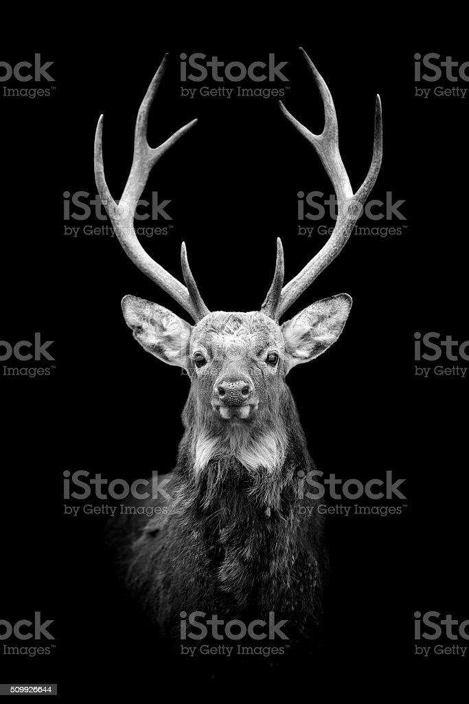 Deer on dark background stock photo