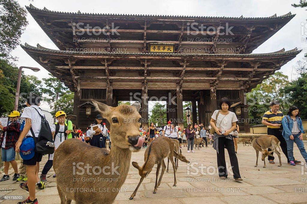 Deer outside Tōdai-ji Temple in Nara stock photo
