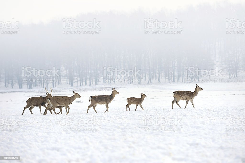 Deer royalty-free stock photo