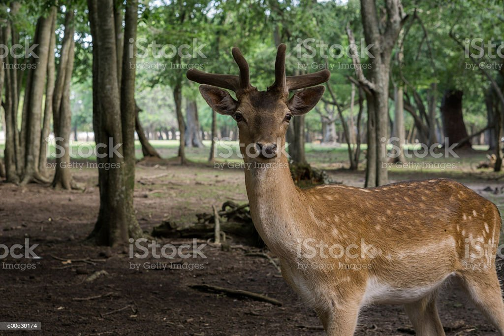 deer profile stock photo