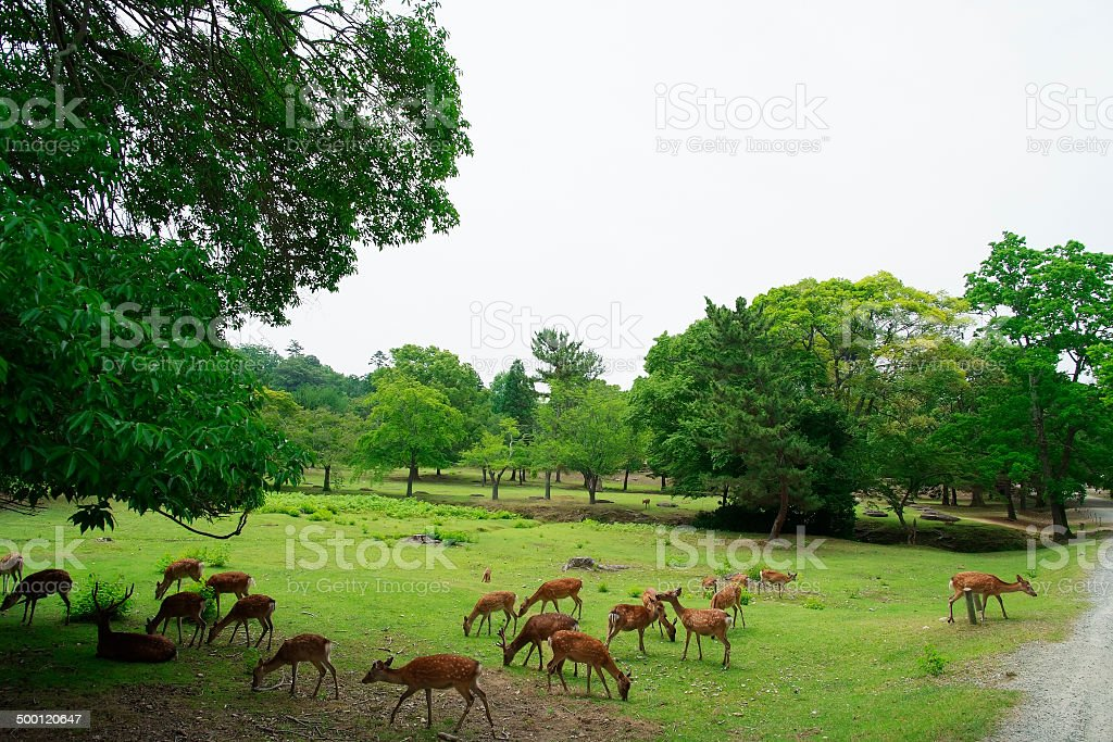 Deer relaxing in a park with copy space stock photo