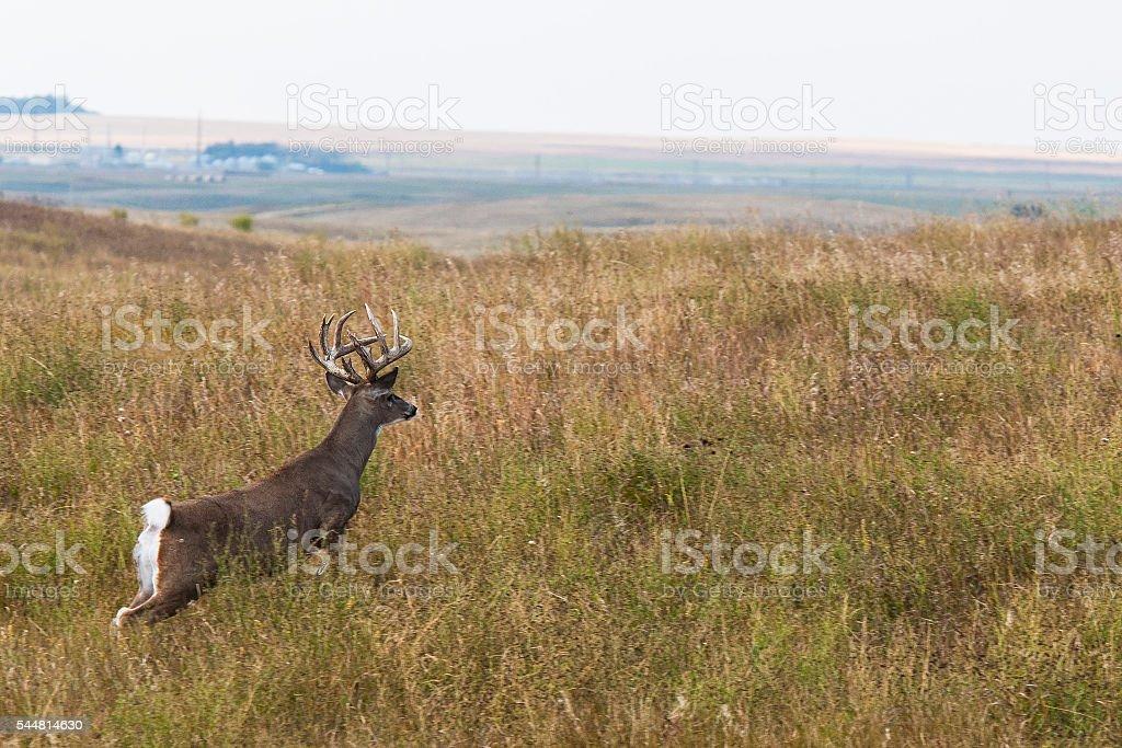 Deer running stock photo