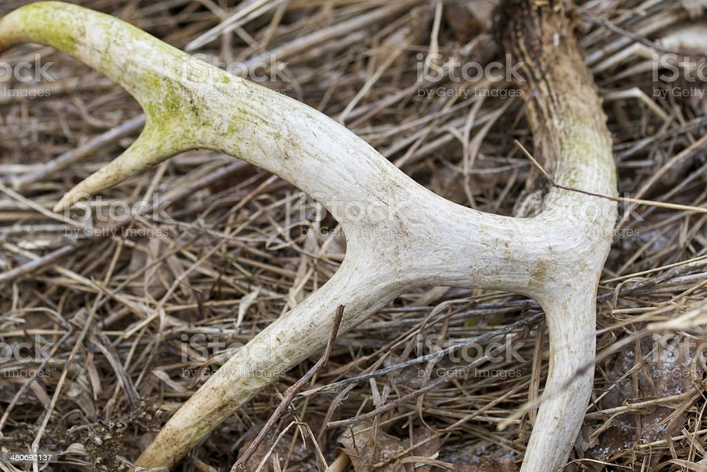 Deer Shed stock photo