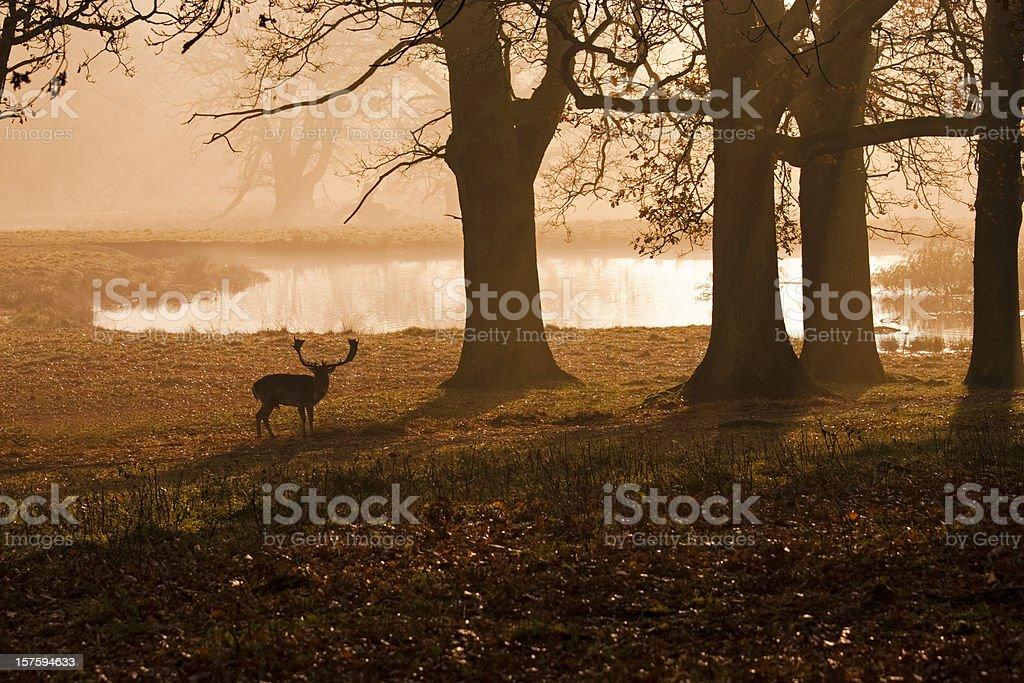 Deer silhouette in a hazy sunset stock photo