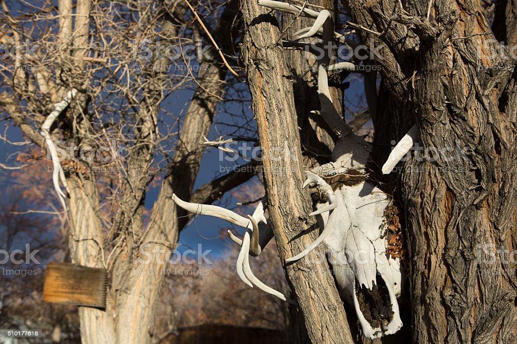 Deer Skull in a Tree stock photo