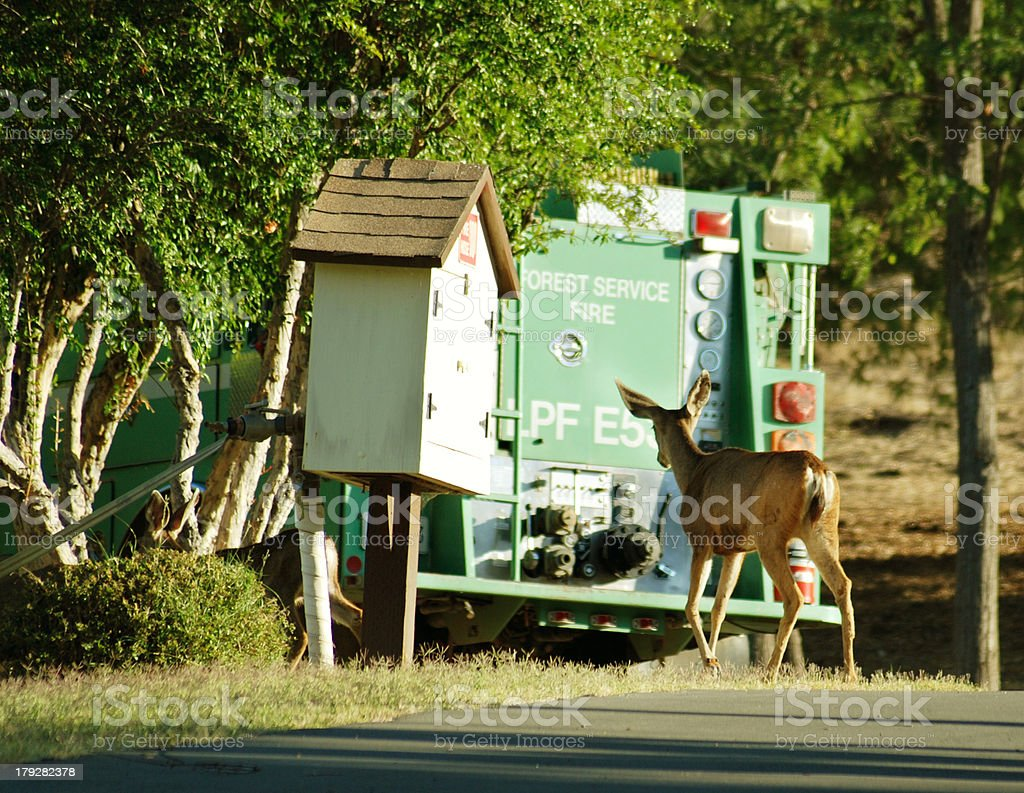 Deer to the Rescue stock photo