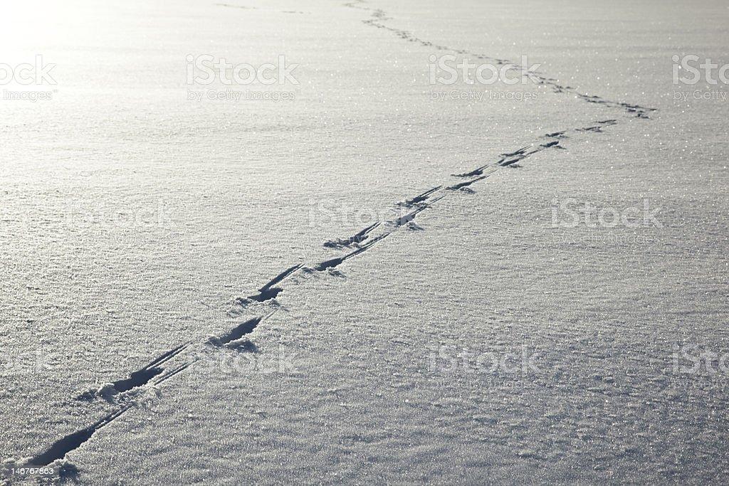 Deer tracks royalty-free stock photo