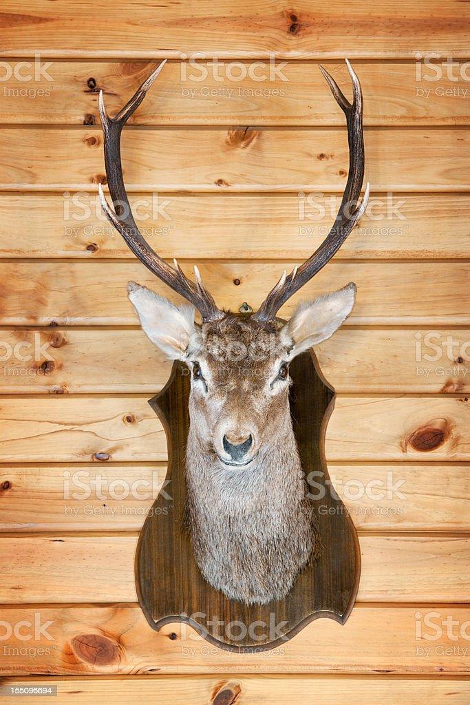 Deer Trophy (XXXL) stock photo