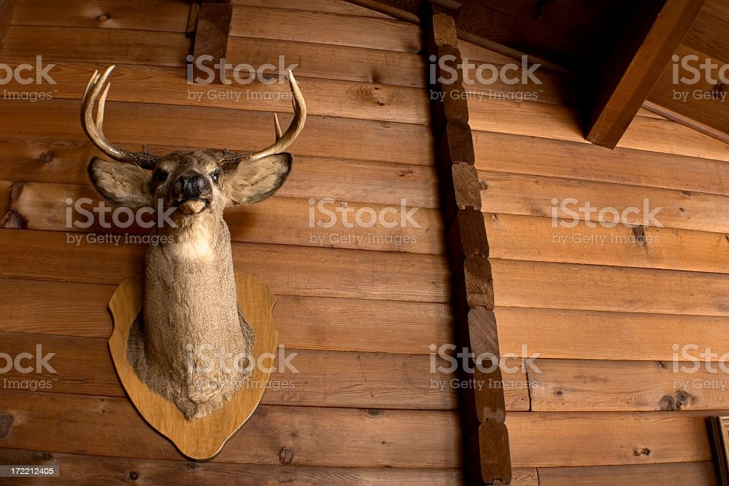Deer Trophy royalty-free stock photo