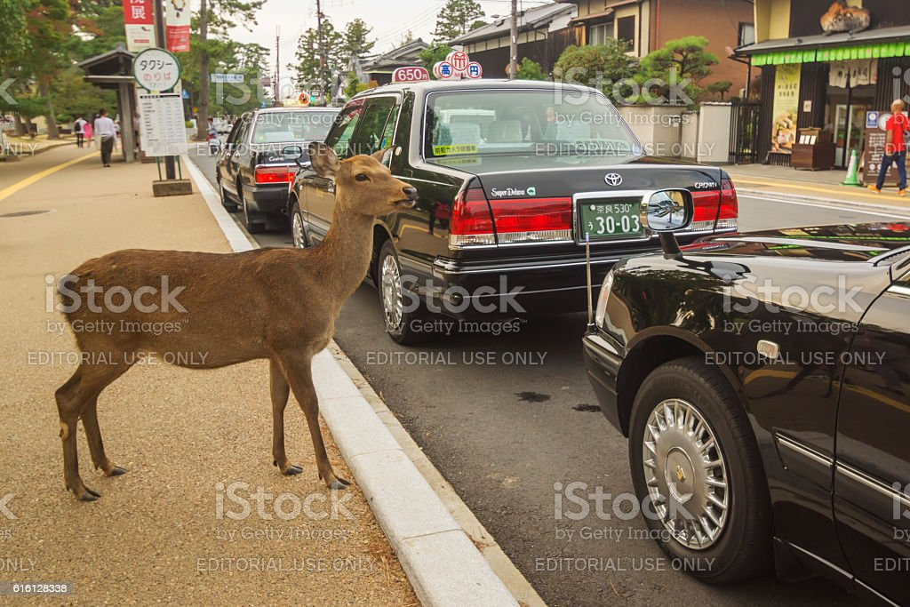 Deer waiting for a taxi at Nara stock photo