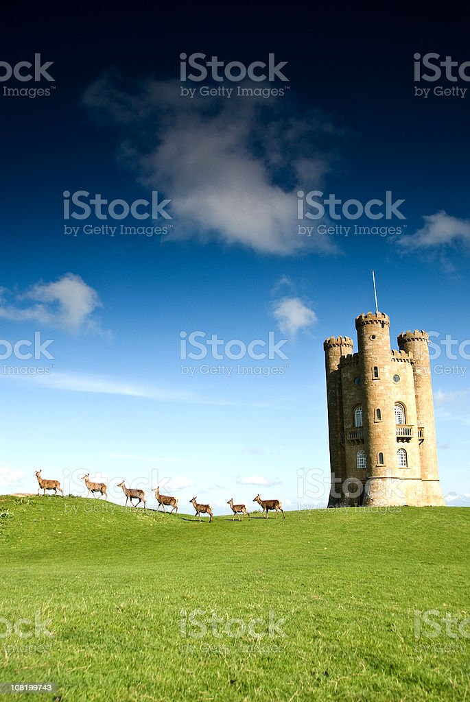 Deer Walking Past English Folly stock photo