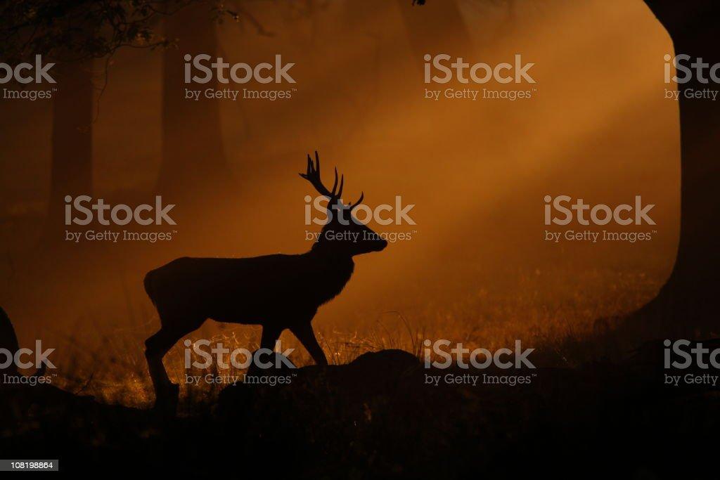Deer Walking Through Mist at Sunset royalty-free stock photo