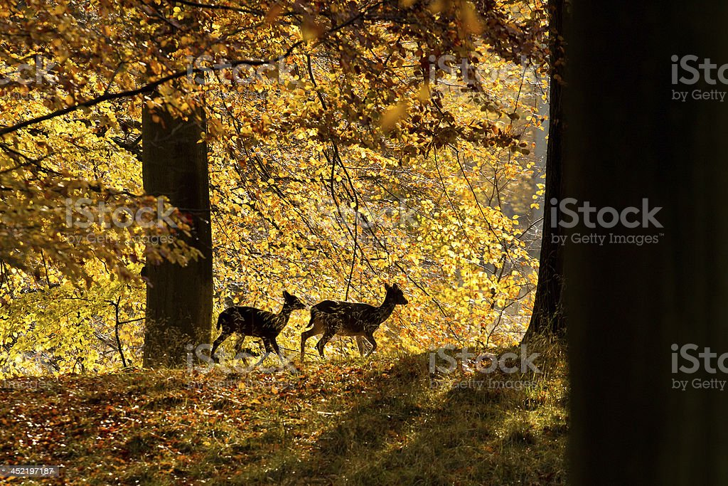 Deer with fawn royalty-free stock photo