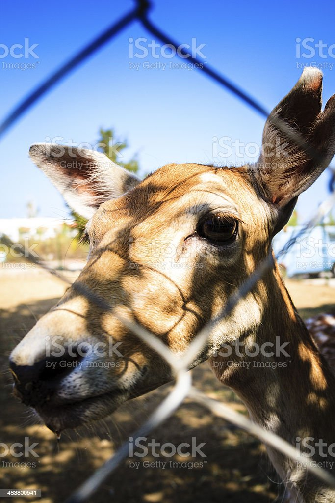 deer zoo royalty-free stock photo