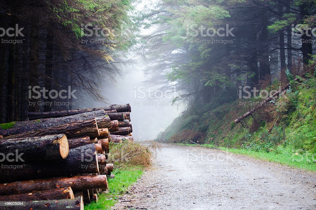 Deerpark and Djouce Woods, Ireland stock photo