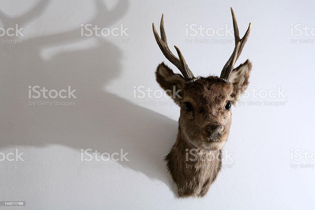 Deer's antleres royalty-free stock photo