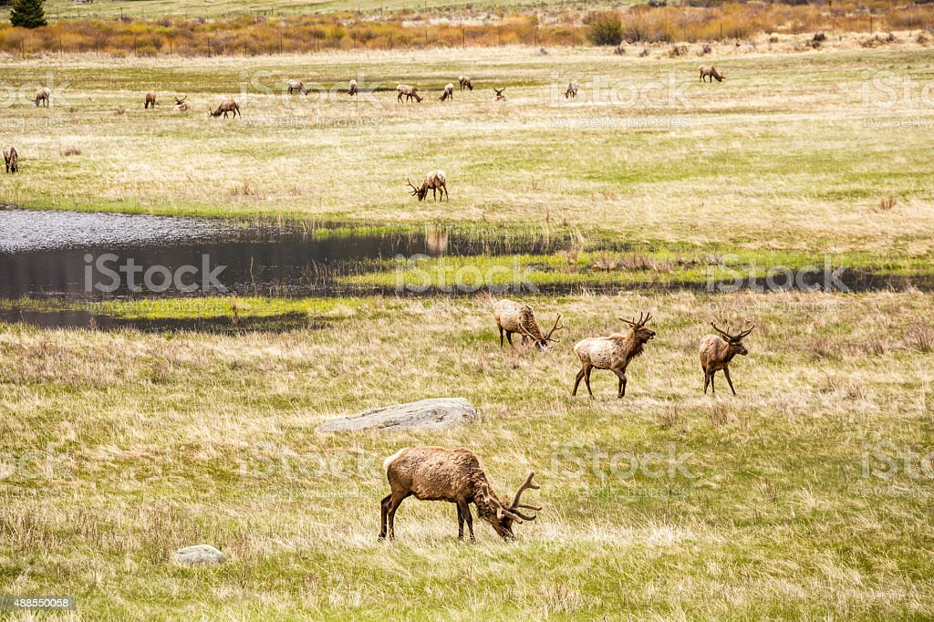 Deers on a meadow eating next to lake stock photo